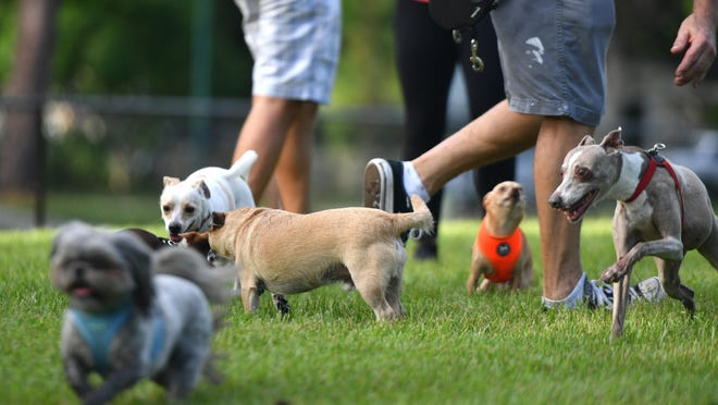 "Springfield City Council will hear an ordinance Monday amending city code concerning control of people's pets, such as defining ""dog-off-leash areas"" and updating penalties for violations, as well as for beekeeping matters."