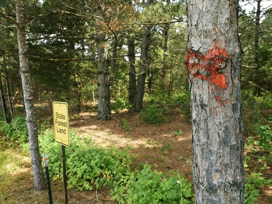 Some trees have already been marked at the back property line of Don and Donna Bouley Thursday next to the Sand Dunes State Forest near Big Lake. The Department of Natural Resources plans to clearcut parts of the forest.