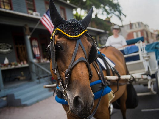 A horse belonging to Pattersons Windmill Carriage waits on Baltimore Street on July 12, 2015. Pattersons has given guided rides around Gettysburg and on the battlefield for over 27 years.