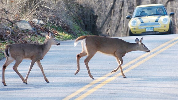 A Pair Of Deer Cross The Stamford Conn Section