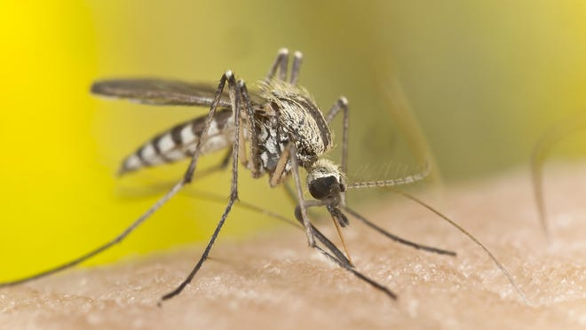 Apps that claim to repel mosquitoes really do exist. Whether the apps actually work is open to debate.