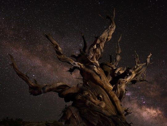 Ryan Engstrom-tree-yourtake-ugc