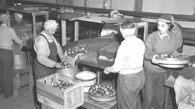"""Grading apples provided seasonal employment to these Casco area women when Harold Heidmann photographed the activity in Hall's apple shed in fall 1952. Hall's orchard, on the north side of Wisconsin 54 in the village of Casco, offered opportunities for tree-run """"pick your owns,"""" though for a little more one could buy a bushel of first quality, ready-picked, mouth-watering apples. Classes from Casco Graded School enjoyed the fall field trips when they walked over to Hall's and got to pick a juicy McIntosh or two to enjoy on the way back to school. BMO Harris Bank sits on the site that was once Casco Graded. Hall's orchard is also long gone, but Hillside Orchard is just down the highway. Thousands of Heidmann photos are available at Algoma Public Library."""