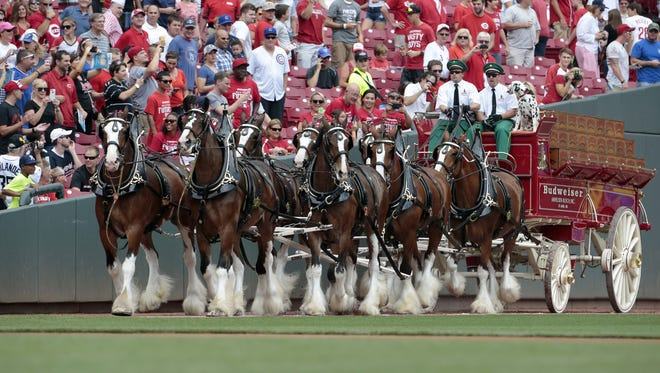 The Budweiser Clydesdales trot around the field prior to the first inning of the All-Star Futures Game at Great American Ballpark in Cincinnati.