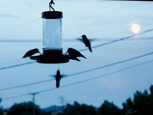 Hummingbirds visit a feeder under the light of Friday's Blue Moon, the second full moon of July. The next Blue Moon is expected in January 2018, and the previous one occurred in August 2012. Randal Seyler - Sun-News