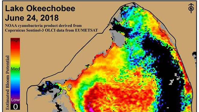 Lake Okeechobee on June 24, 2018 is mostly covered by a cyanobacteria bloom according to a satellite image from NOAA, derived from Copernicus Sentinel-3 data from EUMETSAT.