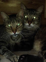 Gucci & Fluffy, once feral cats, prefer spending their