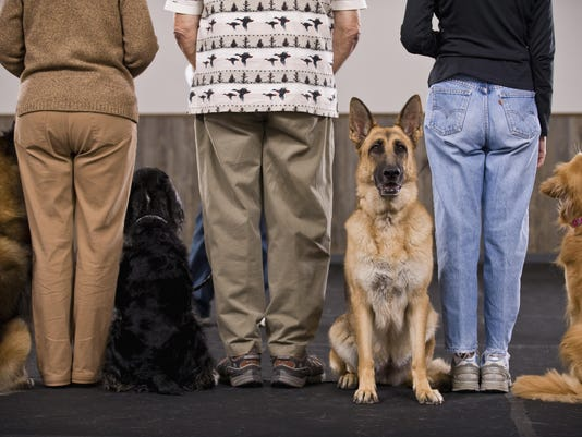 dogtraining 2