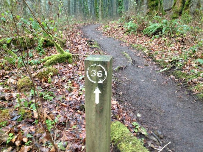 There a easy-to-follow wooden markers along the Section 36 Loop in McDonald-Dunn Research Forest.