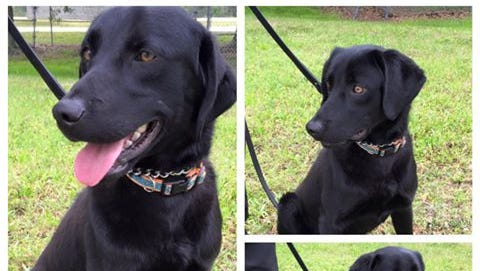 The Lee County Sheriff's Office is seeking to name the newest member of  its K-9 unit.