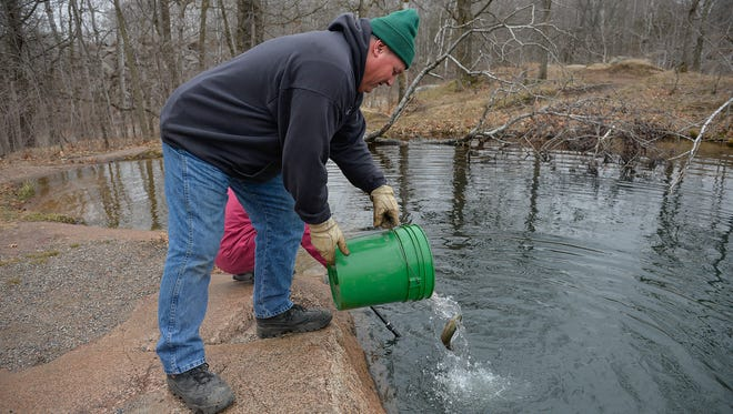 Brian Popp, Stearns County parks maintenance worker, pours yearling trout from a 5-gallon pail into Quarry 13 on Tuesday, April 5. Quarry Park is one of three sites in the St. Cloud area that are stocked with fish.