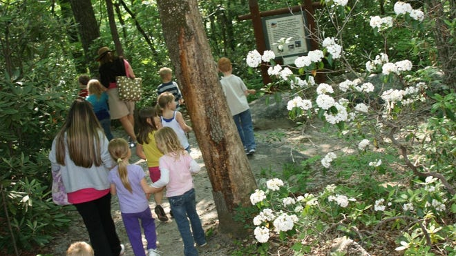 Spring hikes at Chimney Rock State Park highlight migrating birds and seasonal flowers.