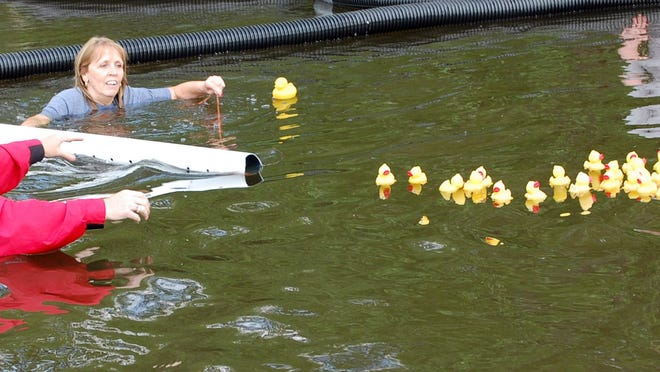 Domestic Harmony volunteers wait for the plastic ducks from a former Duck Derby to enter a sleeve.
