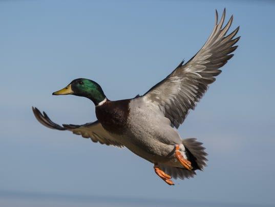 PTH0221 BIRD BLAST
