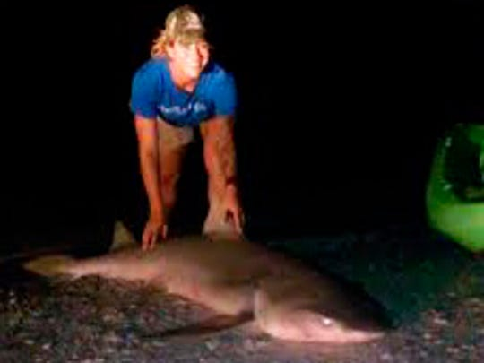 Lauren Dondero used her kayak to drop her stingray bait 100 yards off the Sanibel Causeway, where this 7-foot lemon shark entered the picture, and eventually was released.