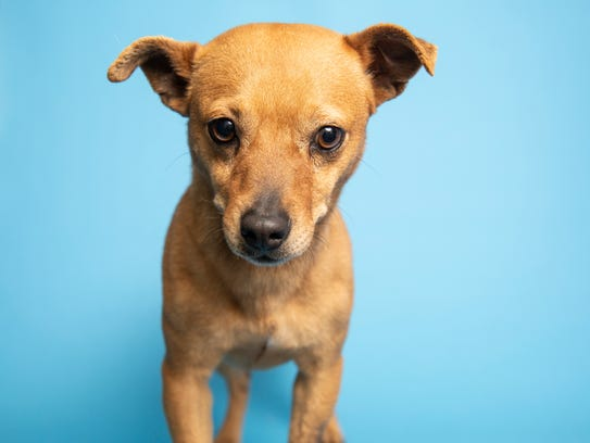Jingle is ready to be adopted at the Arizona Humane