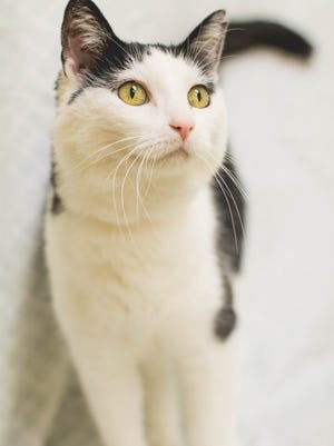 Rescue cat of the week: Gracie