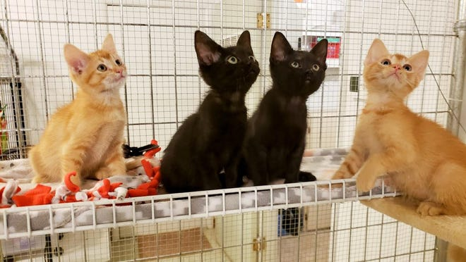 Between Oct. 2019 To Sept. 2020, 196 cats came into the McPherson County Humane Society -- 54 percent from the city, 30 percent from the county, 11 percent from other locations and 6 percent had no records.