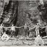 AP: Giant Sequoia monument spared from cuts
