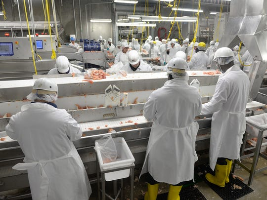 Employees at GNP Co. use knives to trim pieces of chicken during a shift of processing Tuesday morning, April 19, at the Cold Spring plant. The plant employs about 700 total workers, about 550 in processing spread over two shifts.