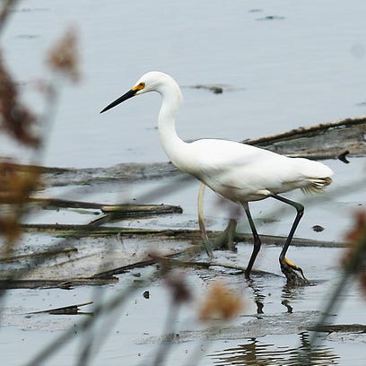 Wildlife and a variety of birds can be spotted at Ormond