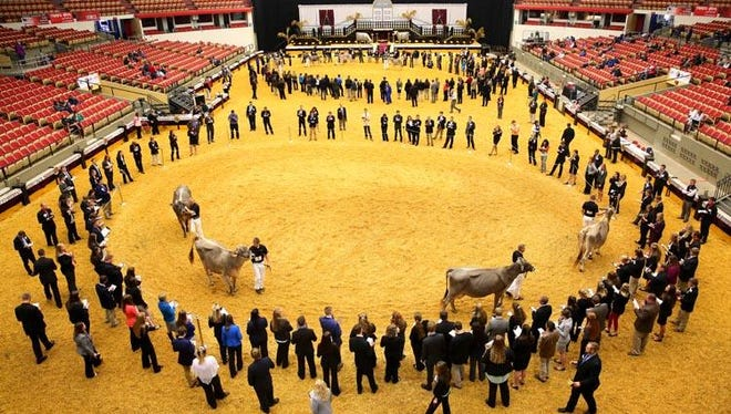 College students from around the country circle the ring evaluating cattle during the National Intercollegiate Dairy Cattle Contest Oct. 3 at the World Dairy Expo in Madison.