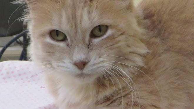 Genoa is a very charming female cat.