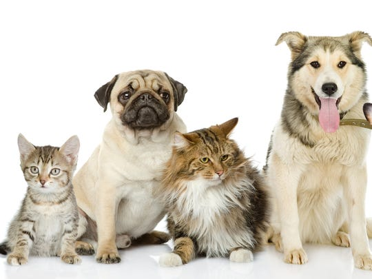 One-year rabies vaccinations will be available at the special $12rate from 2- 5 p.mFriday, April, and 8 a.m.-noon Saturday, April 13, at the followingclinics: All Creatures Veterinary Hospital, All Creatures Veterinary Hospital Lakeside, Animal Health Center, Baxter County Animal Clinic, Spring Park Animal Clinic, The Vet Clinic Inc., Twin Lakes Animal Clinicand Vet ID.
