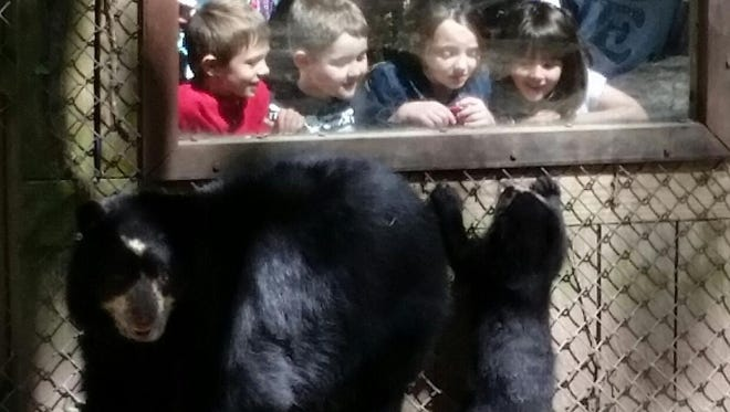 "Kids get a look at the Andean bear cub and her mom at the Salisbury Zoo . The cub was named ""Alba"" on July 24, 2015."