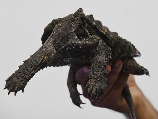 636645086569863573-turtle.jpg