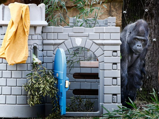 Jump Zoo Toys