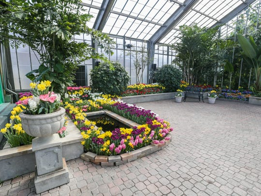 Bulbs bloom during the annual Garfield Park Conservatory