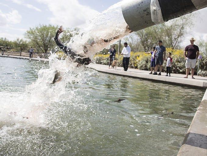 The Arizona Game & Fish Department's release catfish