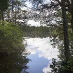 OPINION: March the month to explore Pine Barrens