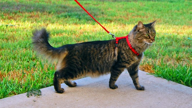 Asheville's leash law does not apply to cats.