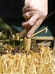 Straw bales treated with fertilizer will start to compost feeding young plants.
