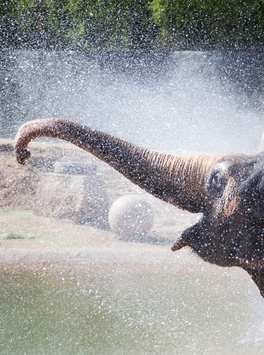 Reba, an Asian elephant, is excited to get a shower courtesy of the Phoenix Fire Department during World Elephant Day celebrations at the Phoenix Zoo on Aug. 13, 2016.