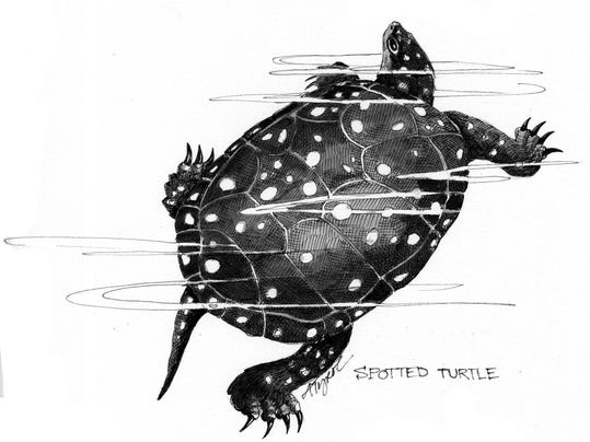 TOS_Spotted_Turtle