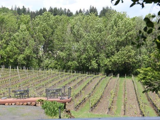 A vineyard at Cristom Vineyards, a Salem, Oregon, winery.