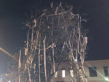 One of Toomer's Oaks set on fire after Auburn's win over LSU