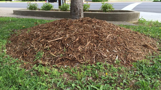Mulch volcanoes waste material, money and are bad for the long-term health of trees.