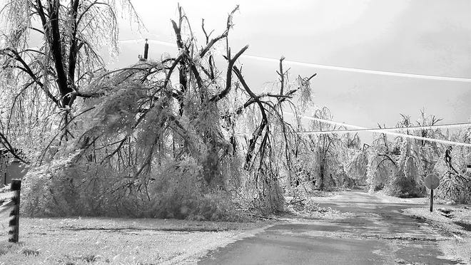 Ice-covered trees during winter storms are susceptible to breakage from the added weight.