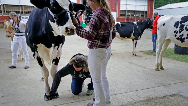 Kris Sroka brushes grass clippings off of Lucy as her daughter, Hannah, gets ready to take part in the Senior Showmanship judging at the Waupaca County Fair Saturday, August 26, 2017, in Weyauwega, Wis.Ron Page/USA TODAY NETWORK- Wisconsin