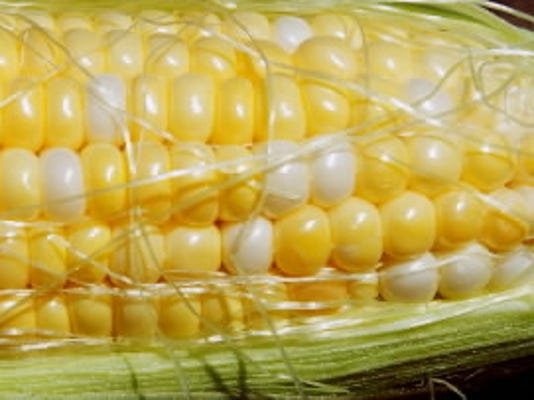 Sweet corn at Swamp Fox Farm in Shrewsbury Township from July 2012  (YORK DAILY RECORD/SUNDAY NEWS - PAUL KUEHNEL)