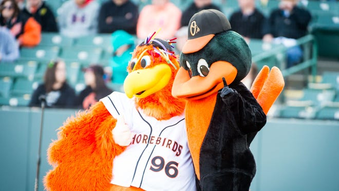 Sherman and the Oriole Bird pose for a photo prior to game time between the Delmarva Shorebirds and Hagerstown Suns on Thursday, April 14 at Arthur W. Perdue Stadium in Salisbury.