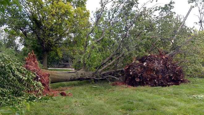 Old growth trees lay uprooted following yesterday's EF1 tornado that passed through the Worthington Hills area, Wednesday, Jun. 27, 2018 in Louisville KY.