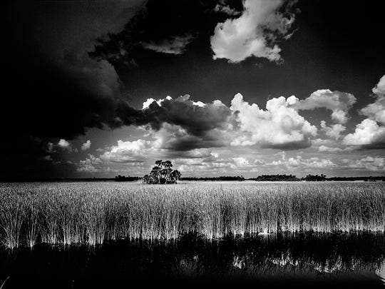 Big Cypress National Preserve: This photograph was taken on the side of the road.