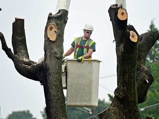Trees are being removed at the intersection of Greenvillage
