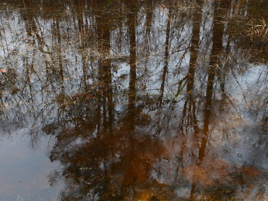 Trees are reflected in standing water.
