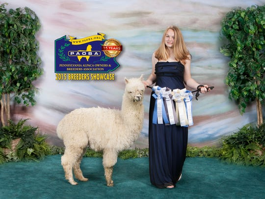 Snowstorm Rookie poses with owner 2015 PA Reserve Alpaca Princess Marissa Shoemaker, of Paradise Township. Both will be at the 2016 Pennsylvania Farm Show.
